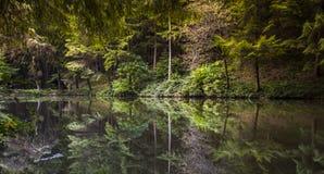Lasowa jeziorna przyrody natury spokoju krajobrazu sceneria Obraz Stock