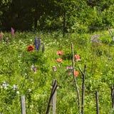 Lasowa ??ka z dzikimi kwiatami i ziele Selekcyjna ostro?? Lato pi?kny krajobraz zdjęcia stock