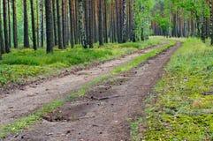 lasowa koh mak droga Zdjęcia Stock