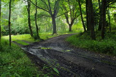 lasowa koh mak droga Obrazy Royalty Free