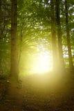lasowa koh mak droga Zdjęcie Royalty Free