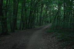 lasowa koh mak droga Zdjęcie Stock