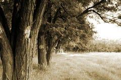 Lasowa krawędź Zdjęcie Royalty Free