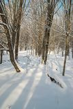 lasowa lodowata zima Fotografia Royalty Free