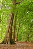 lasowa luksusowa ścieżka obraz stock