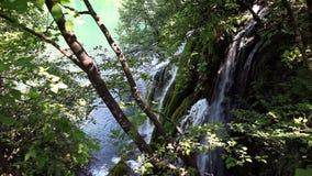 lasowa mała siklawa zdjęcie wideo