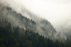 Lasowa mgła Fotografia Stock