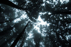 lasowa mgła Fotografia Royalty Free