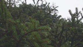 lasowa mglista zima zbiory