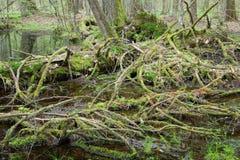 lasowa mieszana wiosny pozyci woda mokra fotografia royalty free