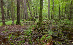 lasowa mieszana wiosny pozyci woda mokra obrazy stock