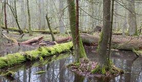 lasowa mieszana wiosny pozyci woda mokra zdjęcia stock