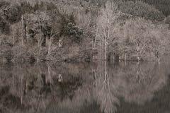 lasowa mistyczka Zdjęcie Stock