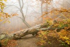 lasowa mistyczka Obrazy Stock