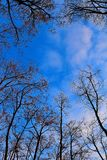Lasowa natura fotografia royalty free