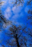 Lasowa natura zdjęcia stock