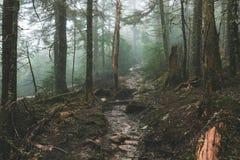 Lasowa natura Obraz Stock