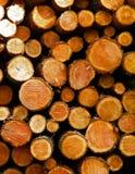 Lasowa odprawa - drewniani promienie jako natury t?o obrazy royalty free