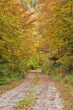 lasowa osamotniona droga Zdjęcia Royalty Free