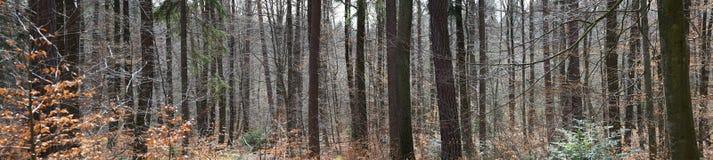 Lasowa panorama Fotografia Stock