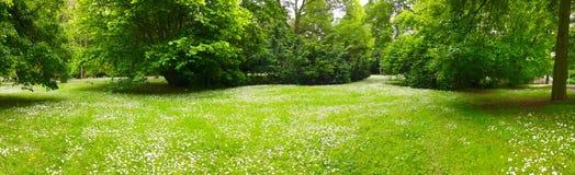 Lasowa panorama Zdjęcia Royalty Free