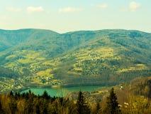 Lasowa paproć Kwiecisty greenery Ñ  ard fotografia stock