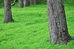 Lasowa podłoga fotografia stock