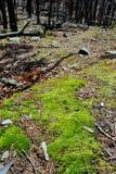 Lasowa podłoga obrazy stock