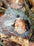 Lasowa podłoga Zdjęcie Stock