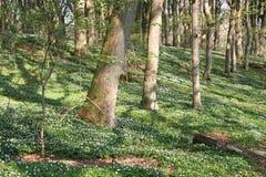 Lasowa podłoga Obrazy Royalty Free