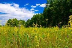 Lasowa polana Obrazy Stock