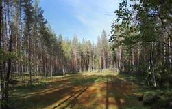 Lasowa polana Zdjęcie Royalty Free