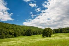 Lasowa polana Zdjęcie Stock