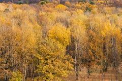 Lasowa polana na krawędzi drewien w jesieni Zdjęcia Stock