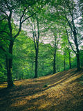 Lasowa polana w połogim górkowatym lesie zdjęcie stock