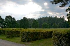 Lasowa przerwa Fotografia Royalty Free