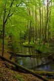 lasowa rzeczna wiosna Obraz Royalty Free