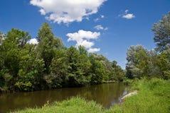 lasowa rzeka Fotografia Stock