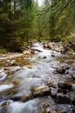 Lasowa rzeka zdjęcia royalty free