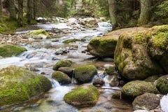 Lasowa rzeka zdjęcie stock