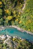 Lasowa rzeka Zdjęcia Stock