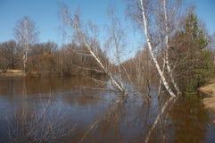 lasowa rzeka fotografia royalty free