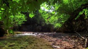 Lasowa rzeka. HDR czasu upływu strzelający zmotoryzowany suwak zbiory
