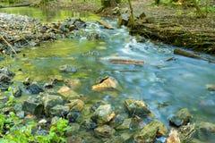 Lasowa rzeka Tęsk żaluzja zdjęcie royalty free