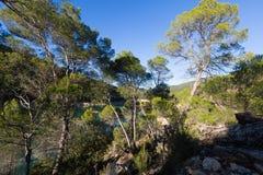 Lasowa rzeka w górach Obrazy Stock