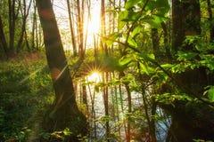 Lasowa rzeka w zielonej lasowej dżungli Lato natury zielony krajobraz z jaskrawym słońcem zdjęcie royalty free