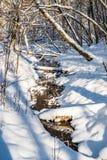 Lasowa rzeka w zimie Zdjęcia Royalty Free