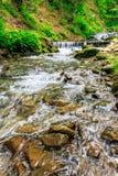 Lasowa rzeka z kamieniami i mech Zdjęcia Royalty Free