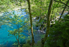 lasowa scena Obraz Stock