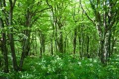 lasowa scena Zdjęcia Stock